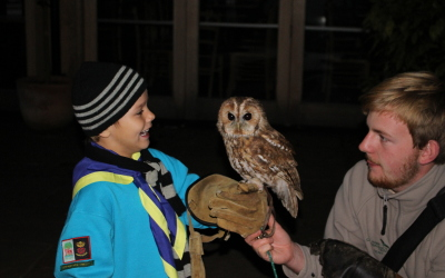 Alfie and Tawny owl