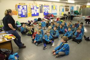 Beavers - listening intently