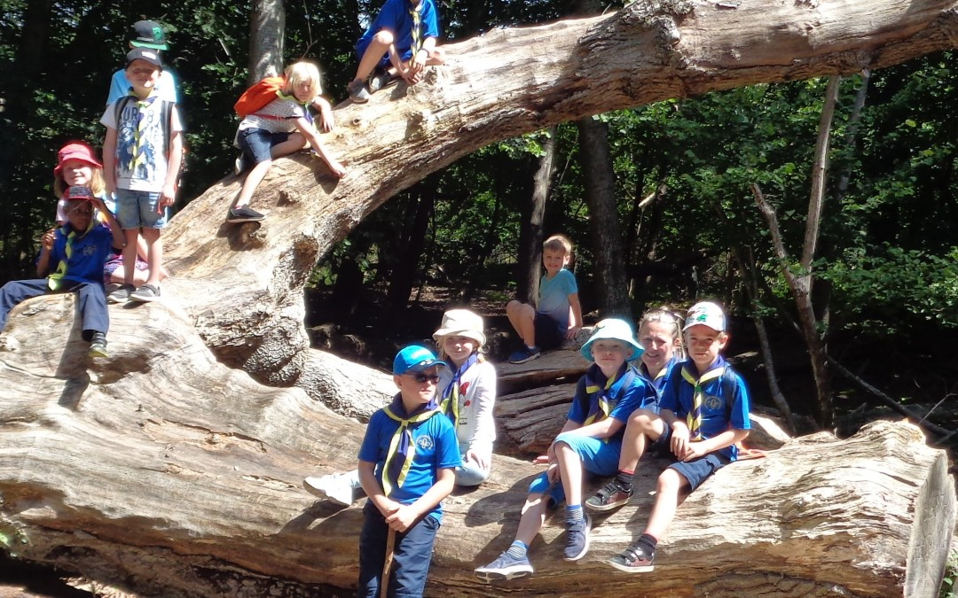 Brownsea Island 2019 – 12th take part in District visit